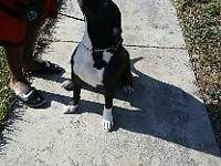 Debo is a young and playful dog he is potty trained and