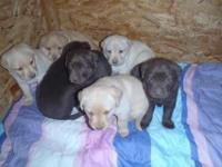 Males and Females available now, 8 weeks, vaccinated