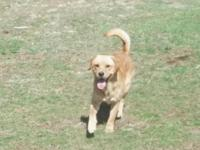 11/2 year aged male yellow lab needs a brand-new home.