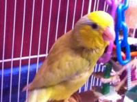Austin needs a new home! He is a beautiful yellow nape