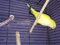 I have a yellow quaker needs new home nice bird but