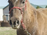 Name: Yin Gender: Mare Breed: Pony Height: 10.2hh