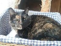 Yolanda's story Yolanda is a very beautiful cat. She