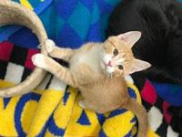 Yondu's story This 12 week old funny, adventurous and