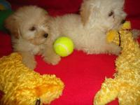 Yorki-poo's; we have two stunning trashes offered.8
