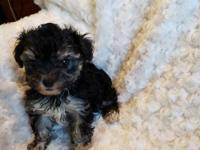 Tiny TESSIE will be a special sweetie for her new