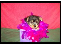 Description I have one female 3/4 Yorkie. She has had