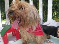 Ladies Man is a small 2yr old male has not been