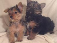 We have a little kid yorkie left. Our other little kid