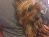 I have a male and female Yorkie I am rehoming the both