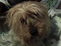 Rehome 4 year old Yorkie very sweet good with kids and