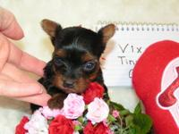 WE HAVE AN AWESOME LITTER OF TINY YORKIE BABIES