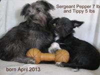These beautiful boys are six months old (born April 29,