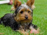 I have a one year yorkie who is house trained and smart