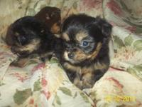 THEY ARE 6 WEEKS OLD AND WE ARE TAKING DEPOSITS ON THEM