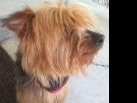 Our 4 yr old Yorkie died suddenly last July..my 4 yr