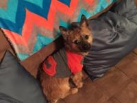 20 month old femaleYorkie Pomeranian. Kennel trained,