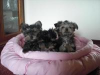 3 little ladies, 10 weeks aged. Social and quite