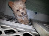 I have a female Yorkie-Poo. She is a sweet heart. Will