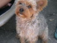 I have a male Yorkie/Poodle mix. He's a year old.