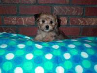 Born Sept 12013 Ready Nov 1, 2013. Mom is a Poodle 5 lb