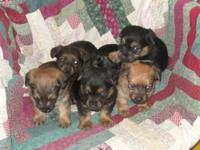 I have 1 female left 8 weeks old and will be ready to