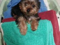 4 month old female yorkie current on shots potty