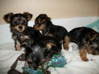 2 males, 2 females for sale, asking $500.00 each. They