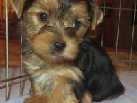 I have two male and one female Yorkie puppies. I DO NOT