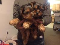 1 male 1 female 8 wks old ready to go to their forever