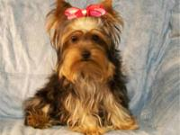 I have 1 yorkie puppy for sale,a female she is black