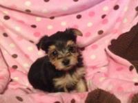 We have 2 female yorkies and 1 male. Asking $750. They