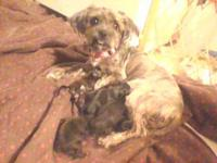 there here my sister dog Finley had her puppies 4