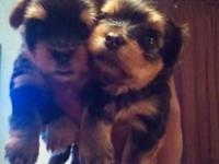 I have 5 puppies for sale to good homes 3 females and 2