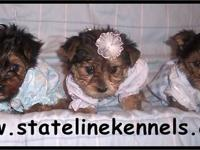 www.statelinekennels.com. We have some adorable yorkies