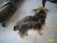 VERY CUTE YORKIE NEED NEW HOME .MY DAUGHTER CAN'T KEEP