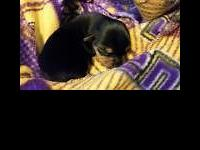 We have yorkie young puppies ready to opt for