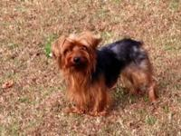 I have a large 3yr old Yorkie who needs a calm and