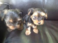 1 male and 1 female left, 8 weeks old, ready to go