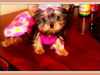 I am a teenager male Yorkie (6 months, weight about 7
