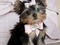 We have 2 amazing Yorkie puppies, a males and a female.