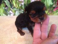 Description: dob 5/8/12 Autumn is a beautiful little