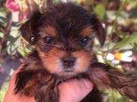 Description: DOB5/8/12 Candy is a beautiful little