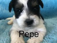This is Pepe! He will come with a health certificate