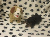 I have a male Yorkshire Terrier for sale. Born Mar. 27.