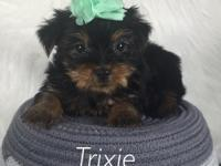 Trixie is a cute little tea Cup yorkie! Her mom is 3