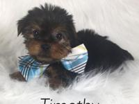 Timothy is a cute little tea Cup yorkie! His mom is 3