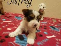 This is Jeffrey.There were 6 in the litter. Sire is a
