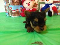 DOB: 10/26/12 Description: Spunky is a adorable black &