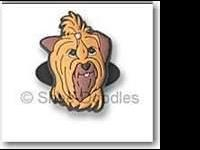 Yorkshire Terrier Yorkie - Snickers -special Needs -